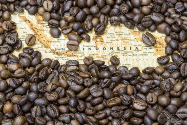 asal usul kopi