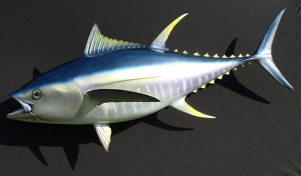 olahan ikan tuna
