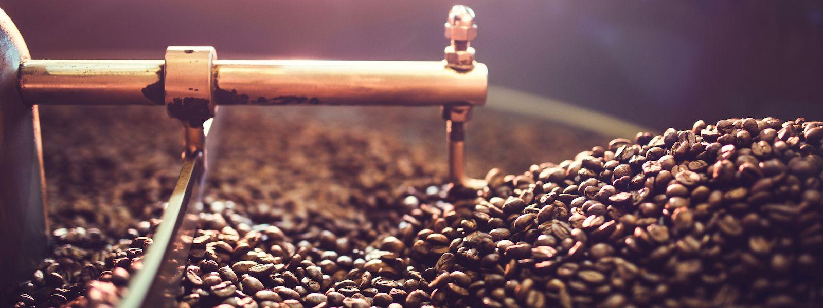 pengolahan kopi